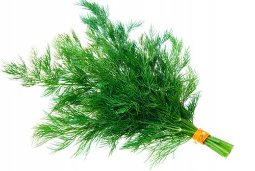 Фенхель садовый Aromatic Emerald Mega Yield