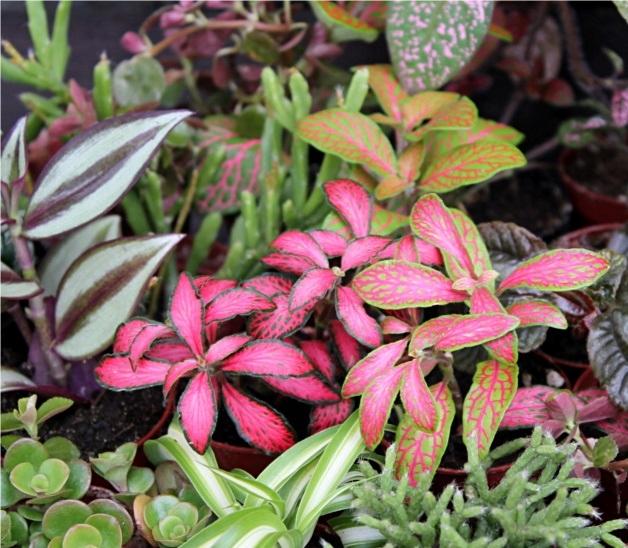 Sada 10 mini d exotických rastlín. 5.5 cm