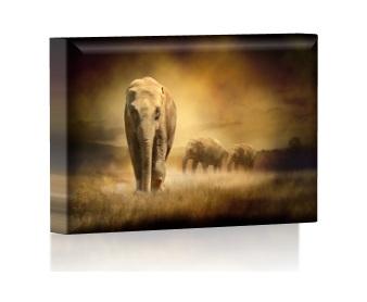 Kinkiet Led 30x20 Obraz Podświetlany Led Promocja 6995020437