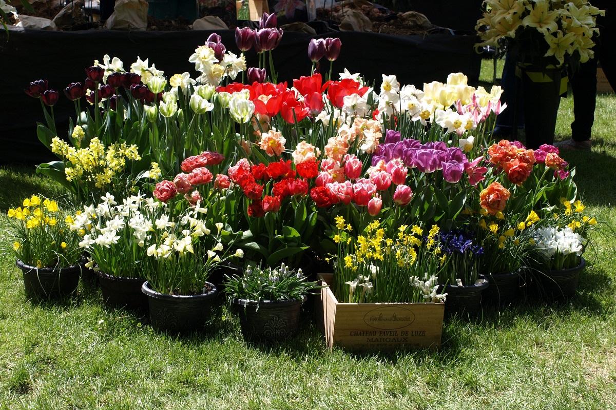 záhrada v kontajneri 9