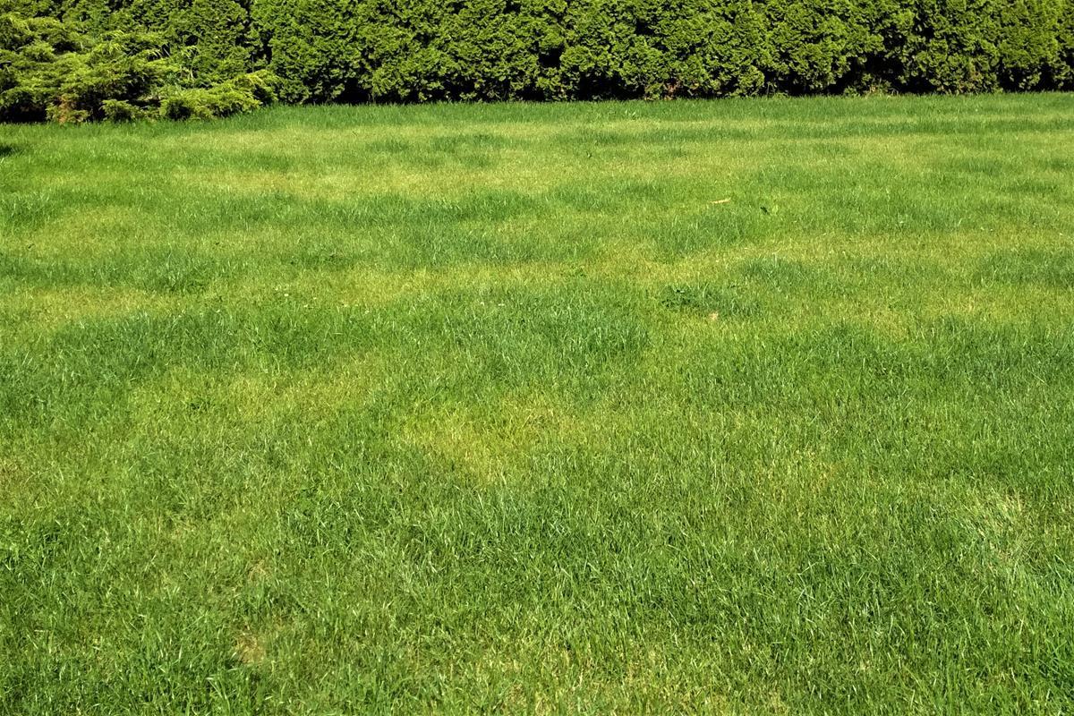 nerovnomerné rozliatie hnojiva