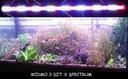 OSWIET LED SPECIAL FULL SPECTRUM ROSLINY 50 CM Rodzaj oświetlenia diody/led
