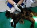 Ile jest dla Ciebie warte życie działkowego kota?