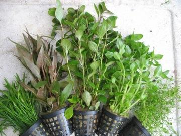 Растения в КОРЗИНКИ для аквариума аквариумные 20 шт доставка товаров из Польши и Allegro на русском