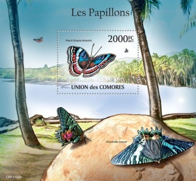 бабочки III Желудочка 2011 блок Чистый #CM11103b